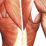 Поражение мышц при системной красной волчанке