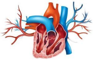 Поражение клапанного аппарата сердца при системной красной волчанке