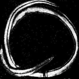 Аскарида (фото) самка