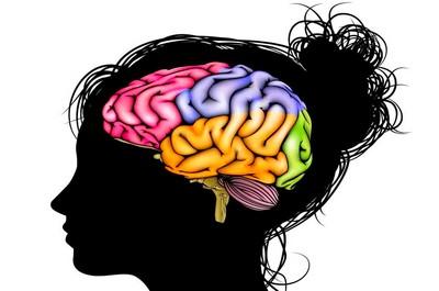 Кора головного мозга и высшие корковые функции