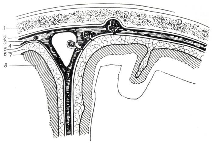 Схема внешних ликворных пространств (по Meyer)