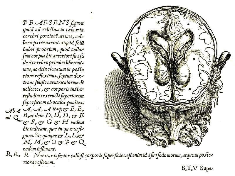 Строение мозга и ликворных резервуаров (по Везалию)
