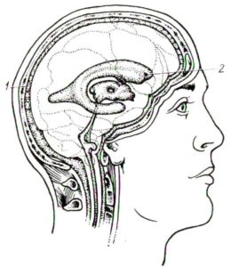 Внешние и внутренние ликворные пространства головного мозга