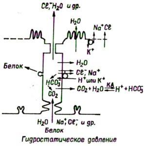 Механизм ликворной секреции
