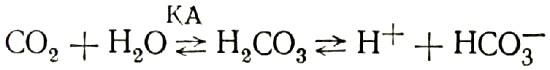 Реакция образования и диссоциации угольной кислоты