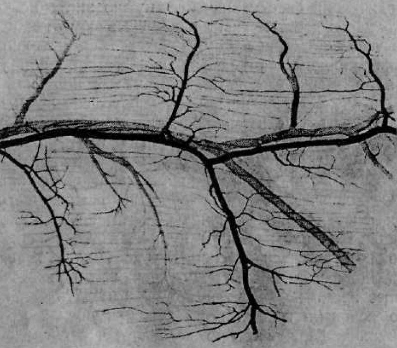 Сосуды мышц (фото): артерии и вены с артериолами, венулами и капиллярами