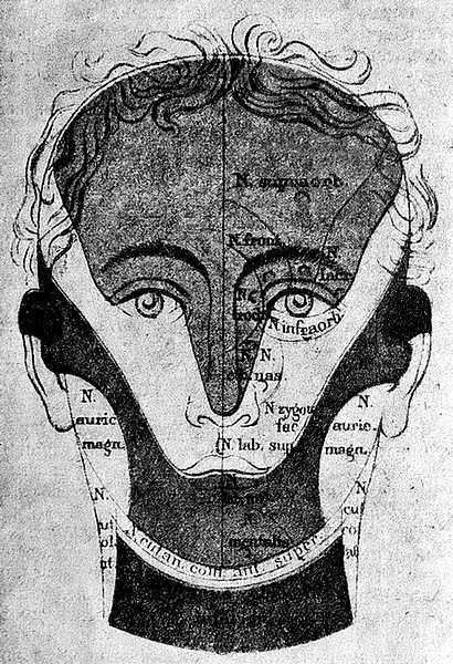 Чувствительные области головы и шеи (фото анфас)