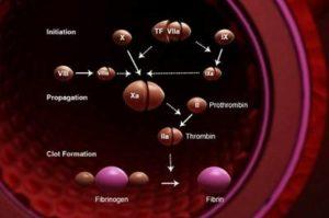 Свертывание крови (гемостаз)
