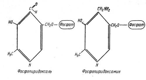 Фосфопиридоксаль и фосфопиридоксамин