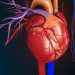 Патология сердечно-сосудистой системы у пожилых и гомотоксикология