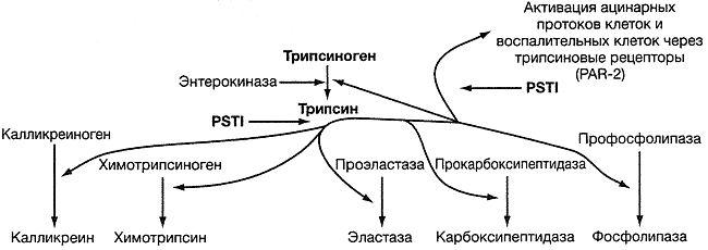 Пути активации проферментов и протеаз-активируемого рецептора PAR-2 трипсином