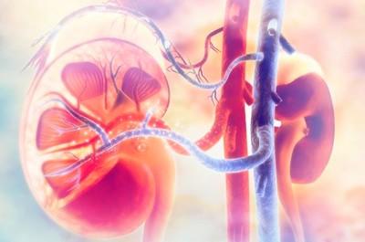 Острый интерстициальный нефрит: причины, клиника, симптомы, диагностика, лечение
