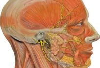 Тройничный нерв - n. trigeminus