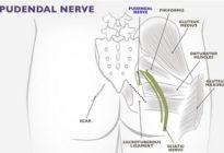 Половой (срамной) нерв